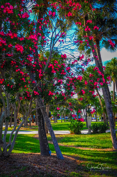 Sarasota-17.jpg