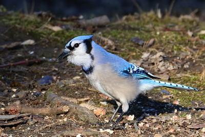 2018 Select Birds
