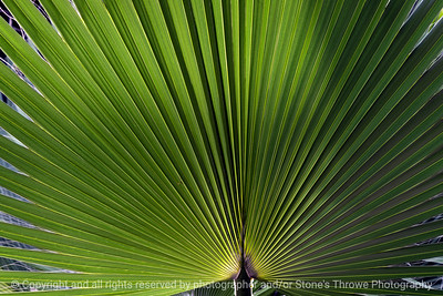 015-leaf-dsm-05jul12-003-7153