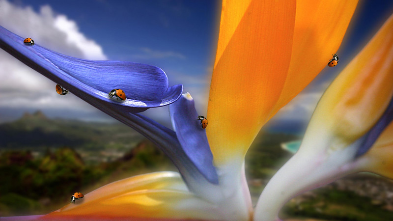 Flowers2 1920x1080 (27).jpg