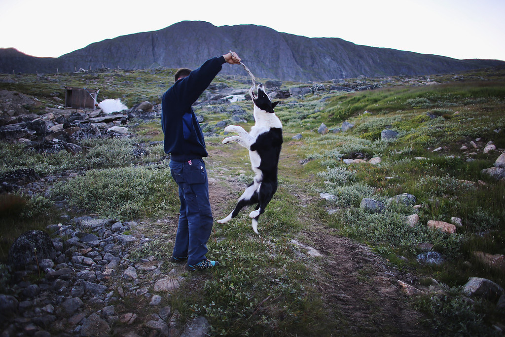. Pilu Nielsen plays with one of his dogs on the families potato and sheep farm on July 30, 2013 in Qaqortoq, Greenland.   (Photo by Joe Raedle/Getty Images)