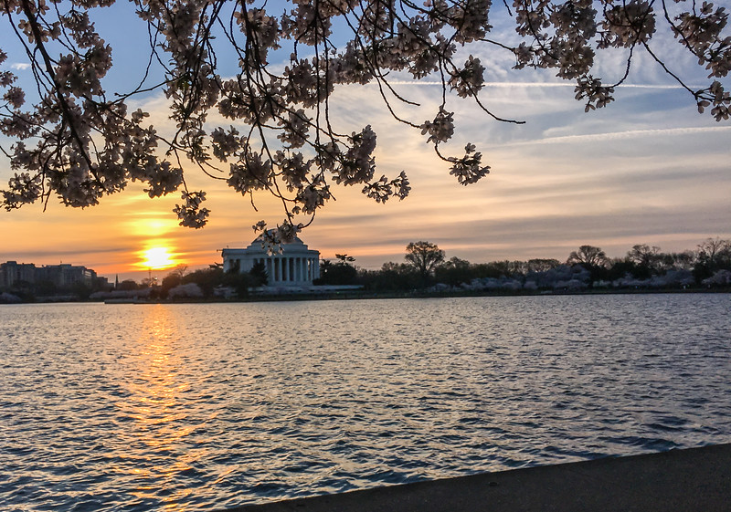 Cherry Blossoms at Sunrise-29.jpg