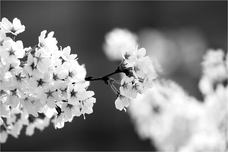 20120323_Hanami_07.jpg