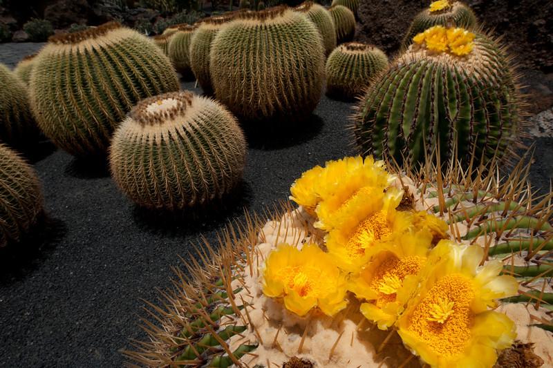 Macro shot of plants in Cactus Garden, Lanzarote, Spain
