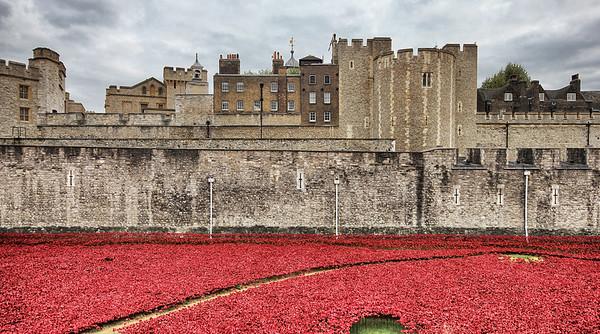Tower of London Poppy Field