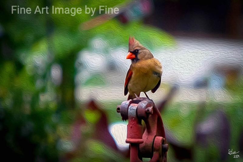 Momma Cardinal