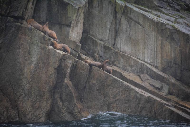 Kenai-Fjords-168.jpg