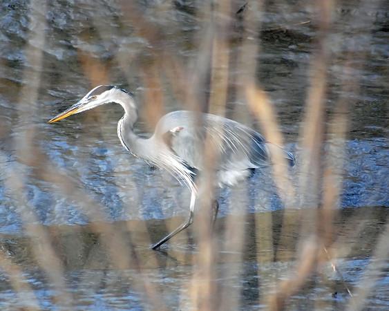 Kent County (DE) wetlands