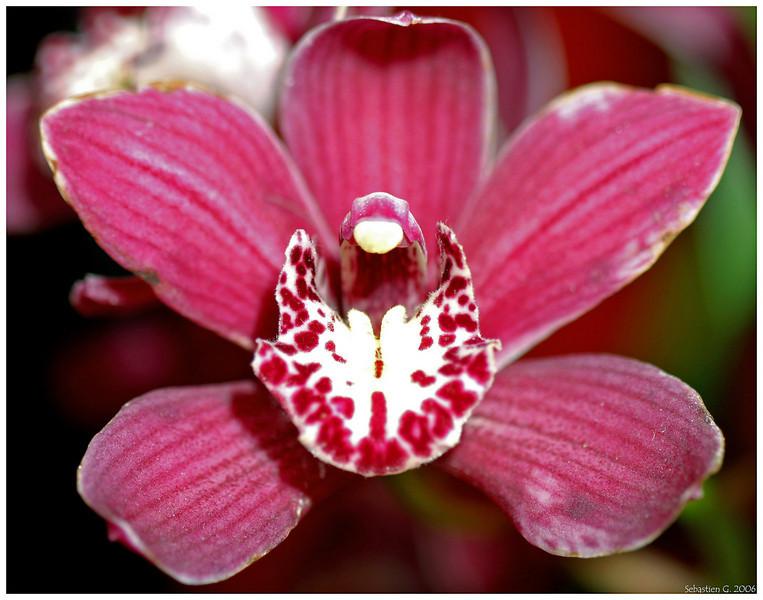 Orchid16_082209.jpg