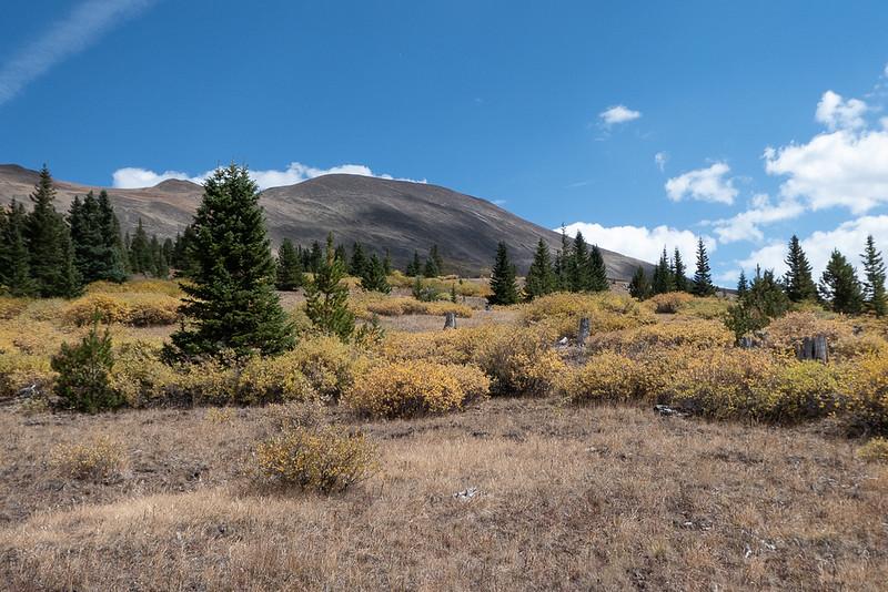 Willow Slopes on Boreas Mountain