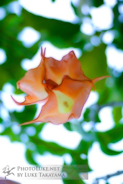 Nature DSC_0008 copy.jpg