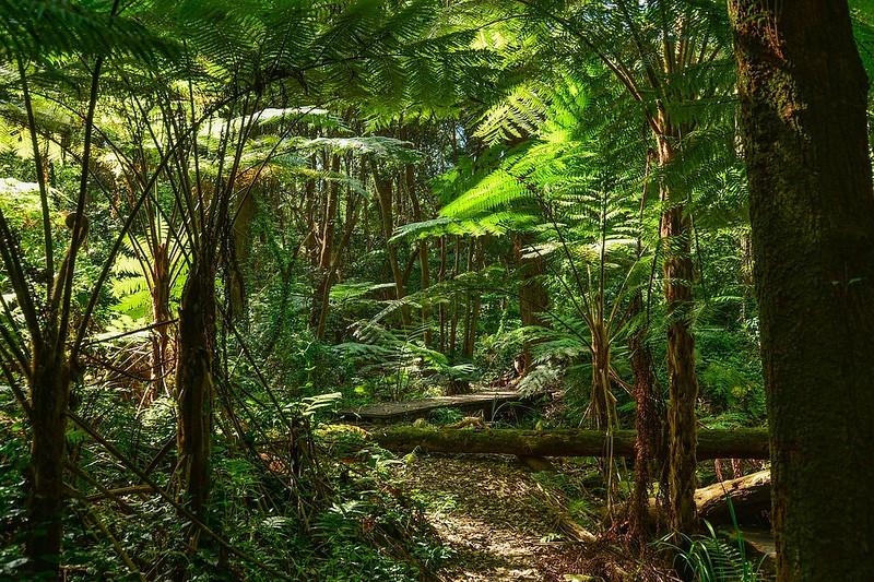 adventures in Queensland Australia Daintree Rainforest