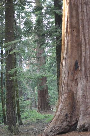 Sequoia 2017 Mateo Lucan Juaquin