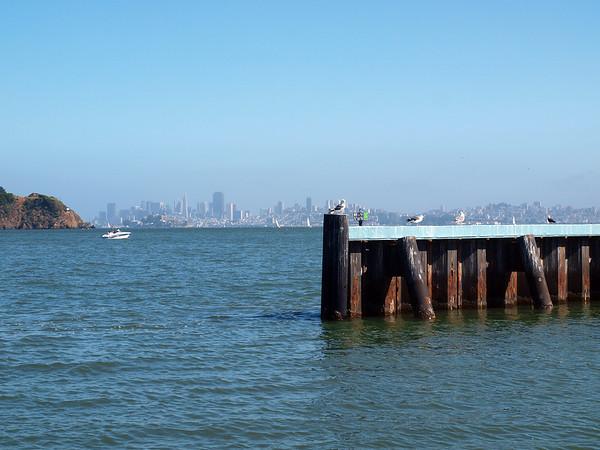 Seagulls with San Francisco skyline