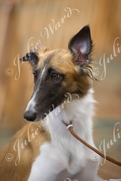 2014 Silken Windhound National