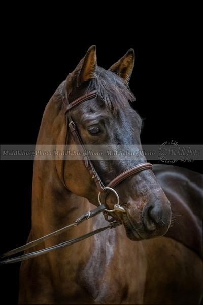 T & C Elite Sport Horses