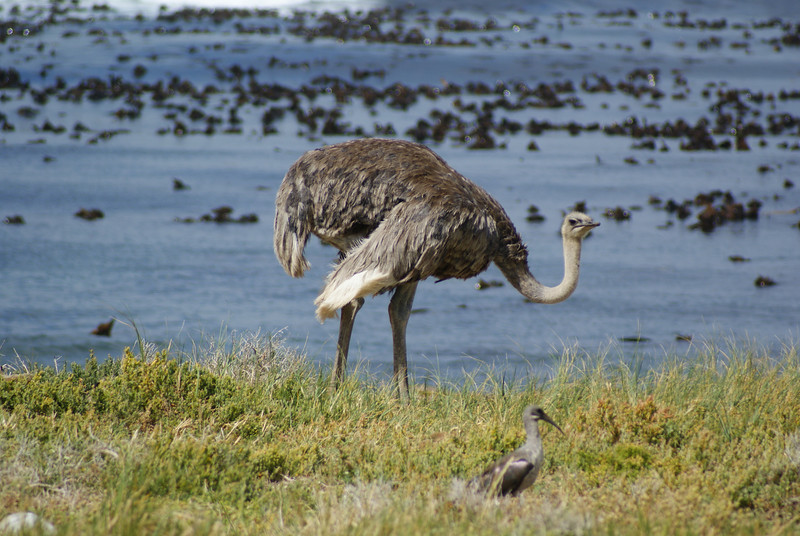 We saw penguins in the forest and Ostriches on the beach!