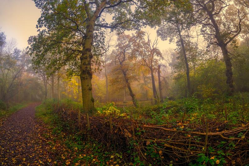 November_15__DSC2100-HDR-Edit.jpg