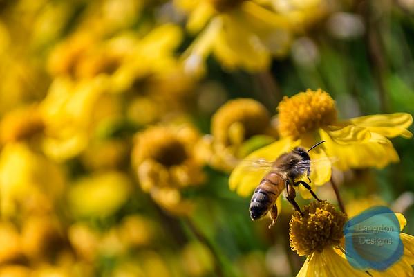 Fall Bees (2016)