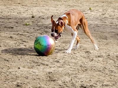Photos in 2018 Dog Park Calendar