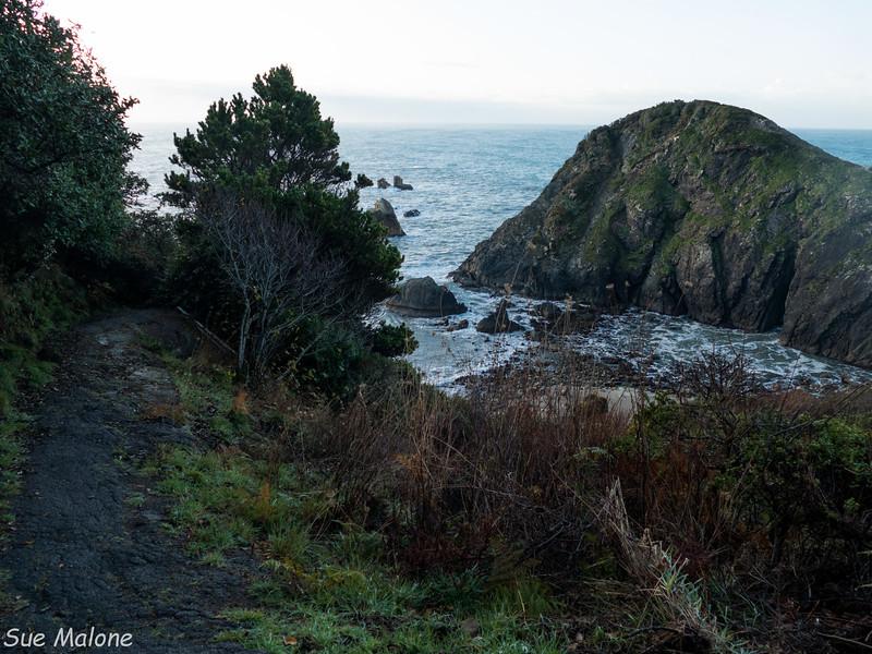 Morning walk at Harris Beach SP-21.jpg