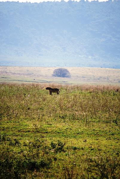 Ngorongoro (51).JPG