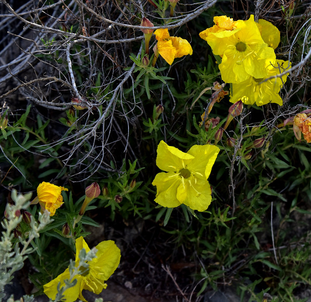 NEA_1166-Flowers.jpg