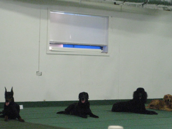 2009 Obedience/Rally Trial