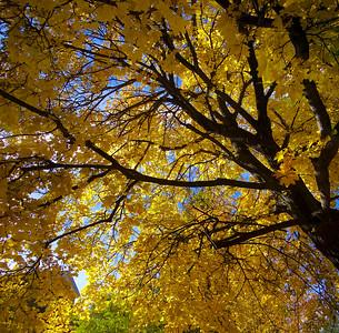 Fall Fade