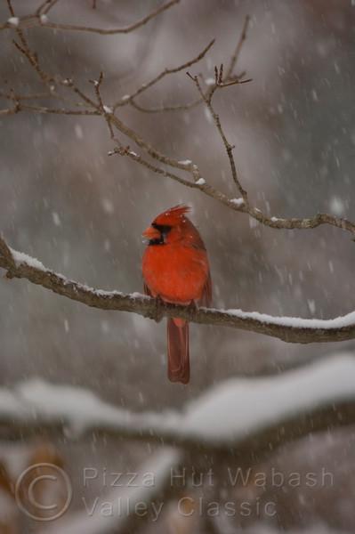 Birds in a snowstorm