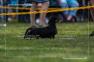 06/24/2017 - AKC Dog Show