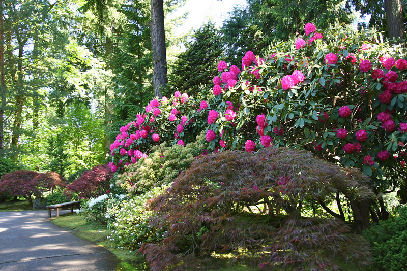 Portland Japanese Garden 6-3-11  1773.jpg