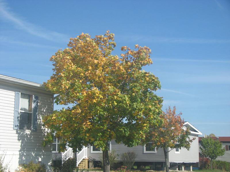 Fall pics 2008 002.jpg