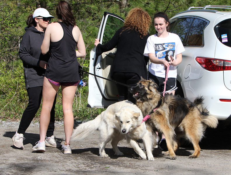 From left, Cheryl Shea of Groton, her daughter Katherine Shea, 16, and their longhaired German shepherd, Holly, and their friends Nancy Keegan of Groton, her daughter Caroline Keegan, 15, and their European retriever, Bella, head out for a walk on the Nashua River Rail Trail in Groton. (SUN/Julia Malakie)