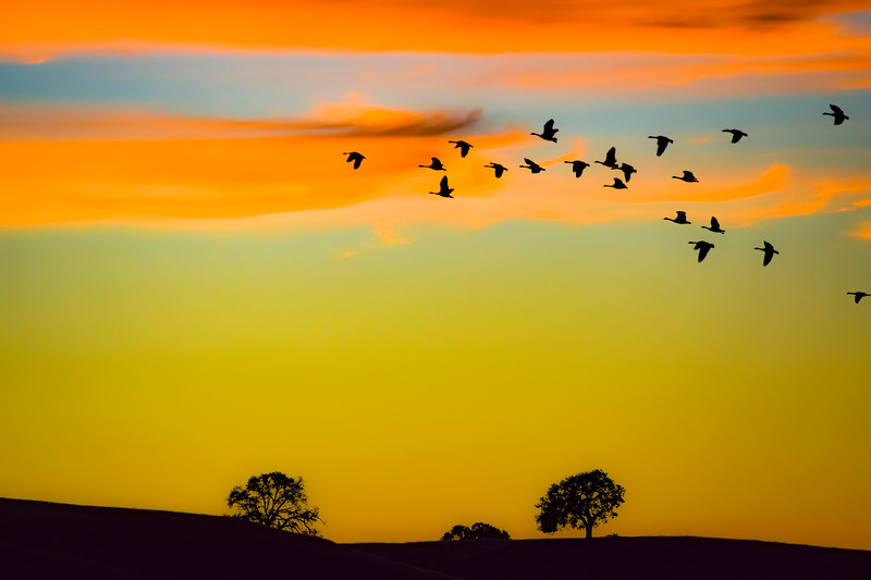 In Formation Sunset-1.jpg