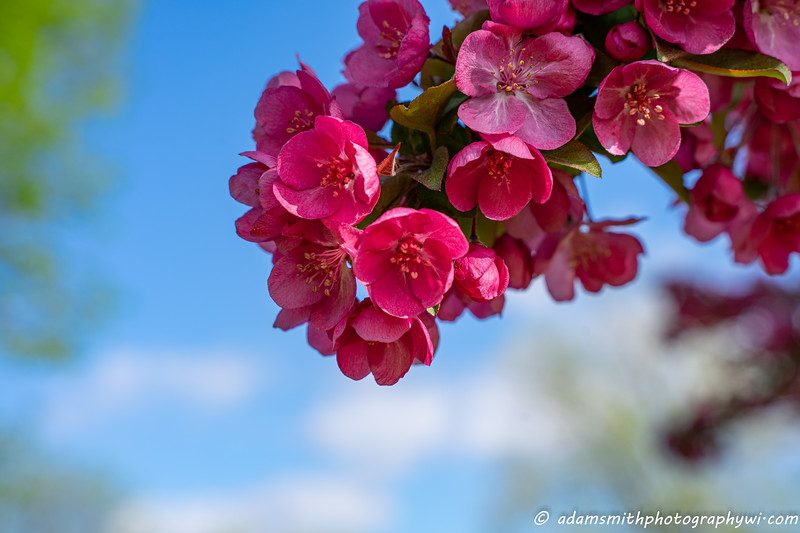 spring-flowers-eau-claire-wisconsin-10.jpg