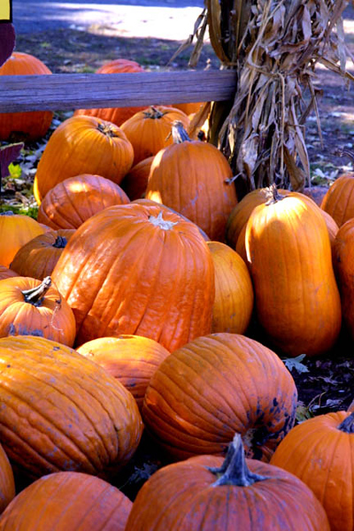 Fall Pumpkins, Sunny Acres.jpg