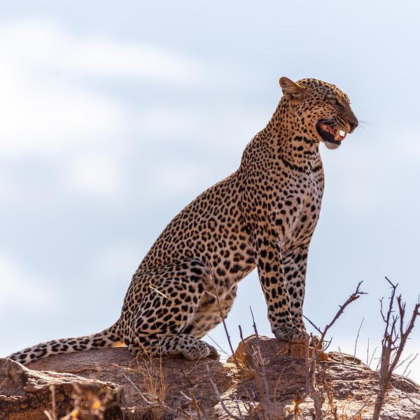 Kenya 2015-00618.jpg