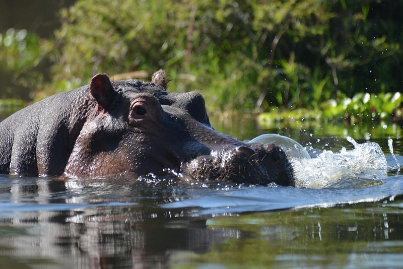 East Africa Safari 146.jpg