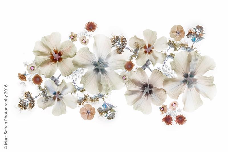 Illuminated Garden Flowers
