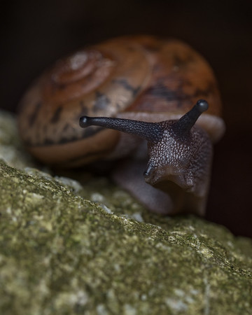 Snakes, Gastropods and more...