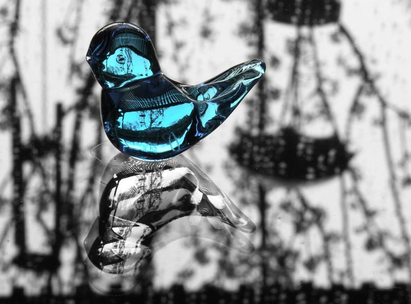 bluebird bw.jpg