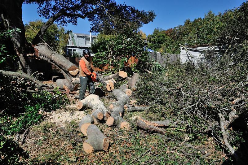 Oak Tree 2919 Hillegass Bruce