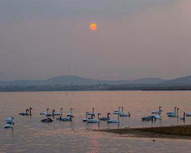 2014.1108 Rongcheng Swan Lake