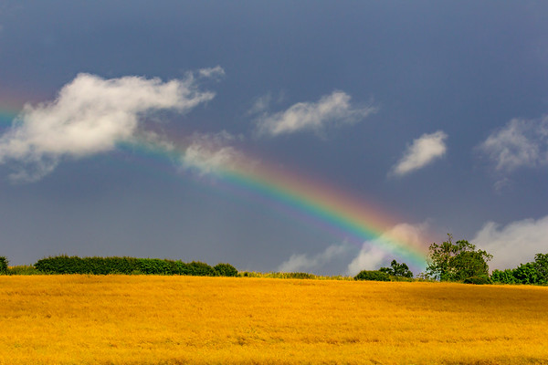 Regn & regnbuer