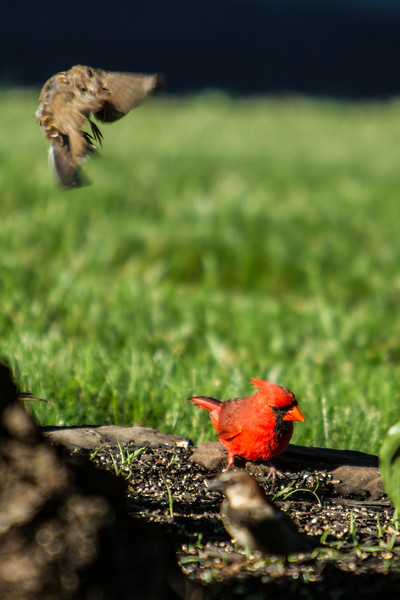 Birding_Rochester_061312_037.jpg
