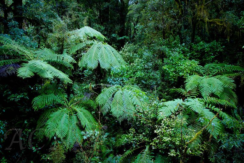 Kiwi Jungle