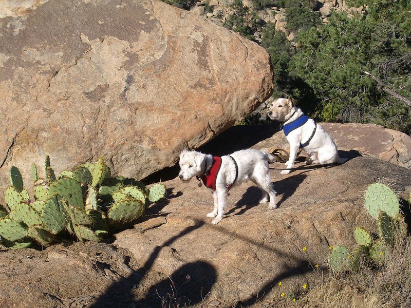 TRhikingdoggies10_10.jpg