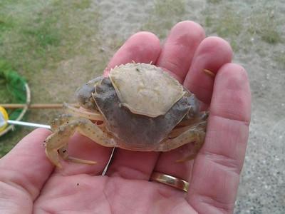 krabber-rejer-etc