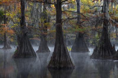 Swamps - Bayou Mosaic - (2016 - 2019)